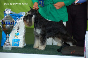 CWC, <span style='color:red;font-weight:bold;'>Club Winner + Best of Breed + Best in Show II</span>